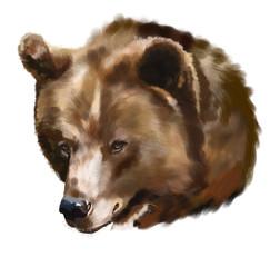 Head of the big brown bear