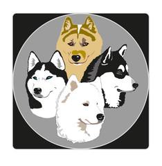 Nordic dog