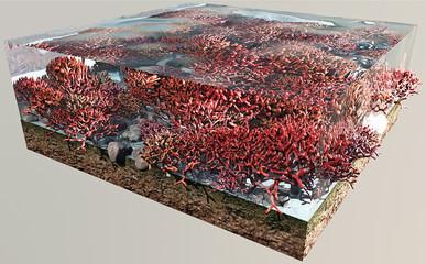 Fondo marino corallo rosso sezione