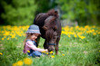 Child feeding small horse in the field at spring.