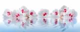 Orchideen im Wasser - 40993354