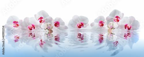 Poster Orchidee Orchideen im Wasser