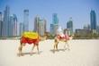 Dubai Camel on the town scape backround, United Arab Emirates