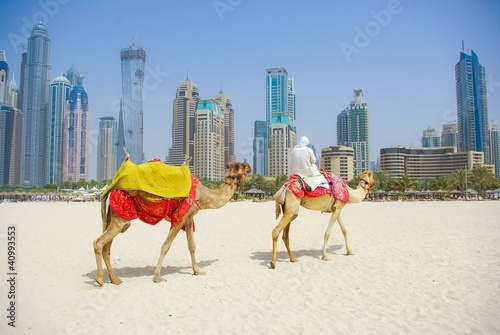 Foto op Canvas Kameel Dubai Camel on the town scape backround, United Arab Emirates