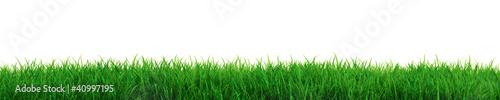 canvas print picture Fresh grass