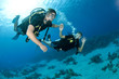 Leinwanddruck Bild - man and woman scuba dive togeather