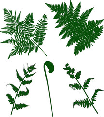 set of green fern silhouettes