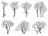 Fototapety Silhouettes of trees without leaves.
