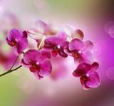 Fototapeta kwiat - tło - Kwiat