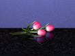 Pink tulips with reflection on dark marble