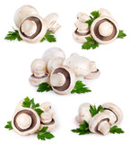 Fototapety Mushrooms