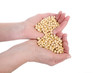 Agricultural concept soybeans in hands isolated