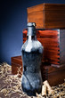 old bottle of wine