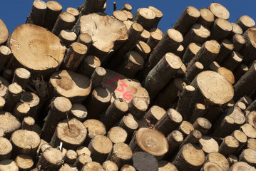 Cut timber logs