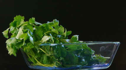 cilantro rotating on black background