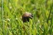 Kleiner Wiesenpilz