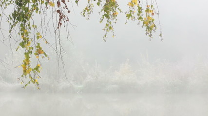 Autumnal Birch Branches Swaying Over A Misty Lake