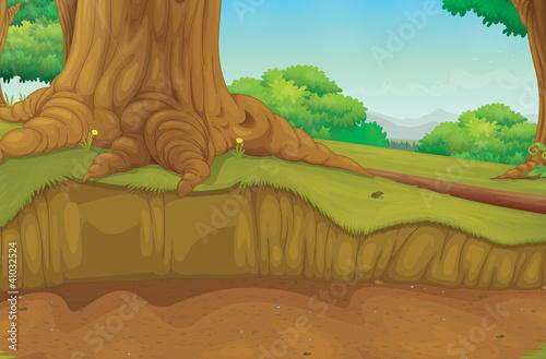 Tree trunk forest scene