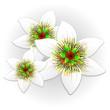 Fiore della Passione-Exotic Passion Flower-Vector