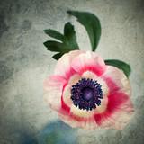 Anemone - texture