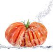 pomodoro splash