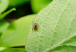 Leinwanddruck Bild - ticky hedge