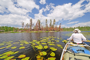 Boreal Forest and marshland in the north woods