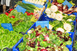 Fresh lettuce