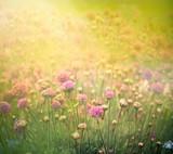 Spring floral background - Fine Art prints
