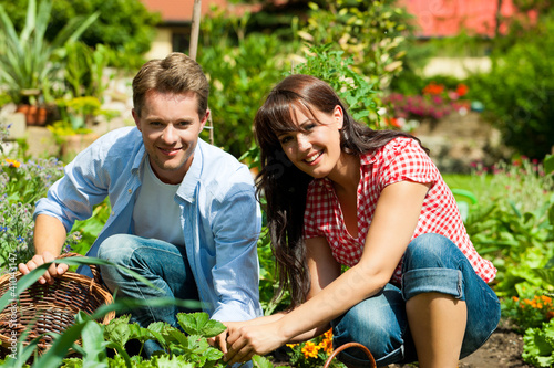 Gardening in summer - couple harvesting