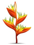 Heliconia-Fiore Rosso Tropicale-Tropical Red Flower-Vector