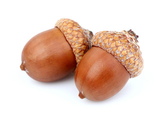Two dried acorns