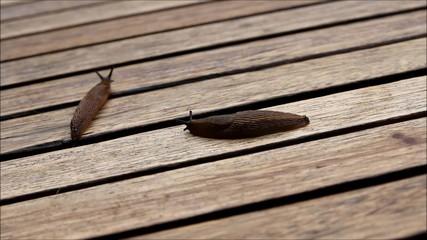 zwei schnecken auf einem Holztisch