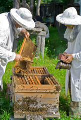 Beekeepers at hive 6
