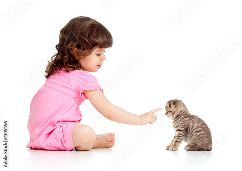 funny child playing and bringing up Scottish kitten