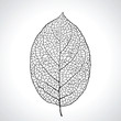 Black macro leaf natural isolated. Vector illustration.