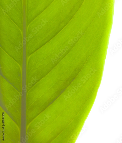 Green Soft Leaf