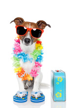 chien en tant que touriste avec lei hawaïen