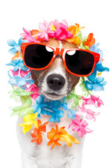 dog with hawaiian lei over the head