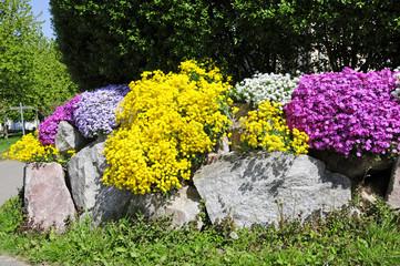 Mauerbepflanzung