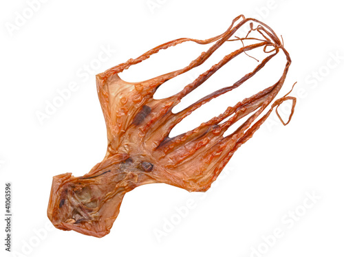 close up of dried octopus isolated on white