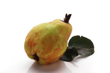Pera cotogna Quince pear