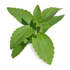 stevia rebodiana substitut du sucre