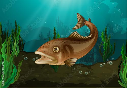 Fotobehang Onderzeeer Fish underwater