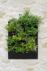 jardin - mur végétal