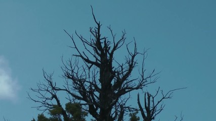 Old dead tree in Bend Oregon