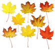 Fall Maple Leaf Collage