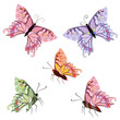 graceful tropical butterflies