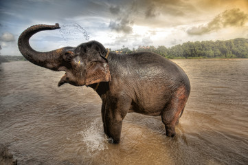 elephant bath in Kerela , south india