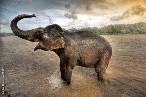 elephant bath in Kerela , south india